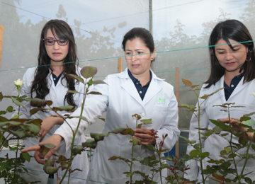 Nuevo fitoncida desarrollado en colombia en el centro de investigación