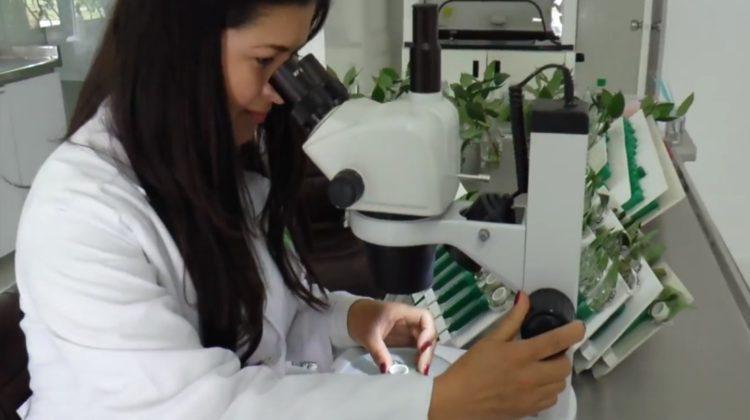 Los compuestos orgánicos volátiles, al ser fragantes, permiten la comunicación química de las plantas con otros organismos. Varios tejidos de la planta, como las flores, emiten estos compuestos para llamar la atención, por ejemplo, de los polinizadores.